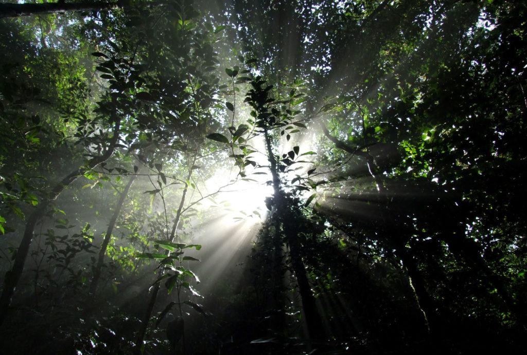 Viva o verde! Ilha Grande – RJ